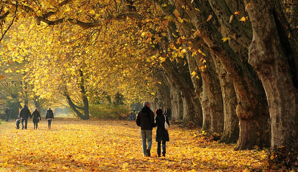 Couple walking down a trail covered in yellow leaves surround by large trees in the fall