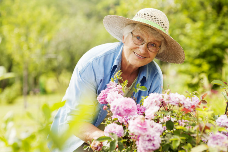 older woman wearing a sun hat as she prunes pink flowers